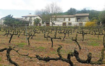 Ya está embotellado el vino SAGALS de Masia Vila-Rasa