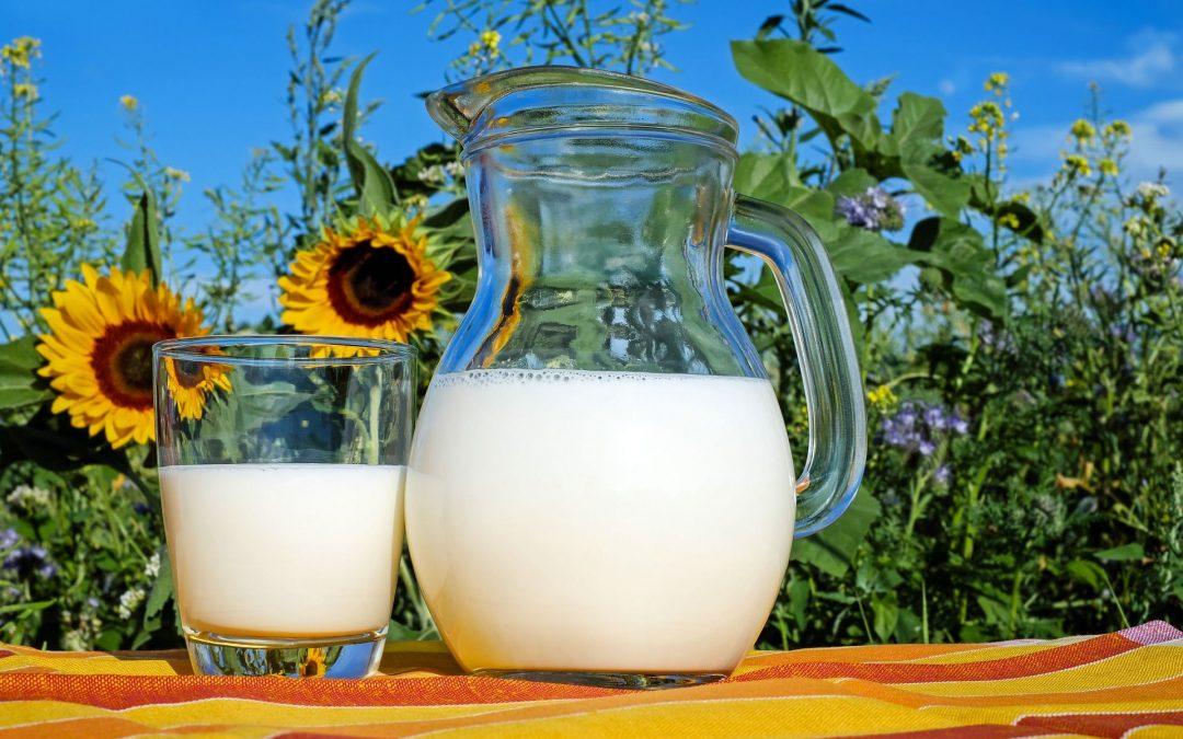 La leche, un alimento básico y funcional