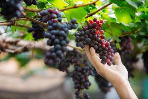 La sostenibilidad en el sector alimentario